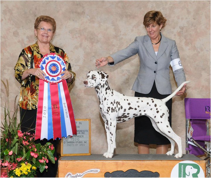 Pauli Best in Show Dalmatian Oct 2010